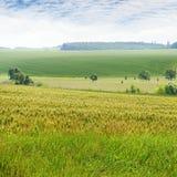 fält och sky Arkivfoton