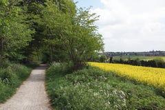 Fält och träd för landsbana nära Royaltyfri Fotografi