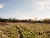 Fält och träd i vildmarken Arkivbild
