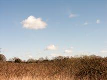 Fält och träd med vasser i den blåa himlen arkivfoto