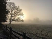 Fält och träd på gryning på dimmig morgon Fotografering för Bildbyråer