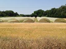 Fält och växthus Arkivfoto