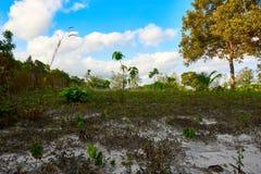 Fält på den soliga sommardagen Koh Rong Sanloem ö, lat strand Cambodja Asien arkivfoton