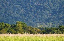 Fält på grunden av berget Royaltyfri Fotografi