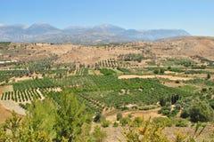 Fält på Kreta Royaltyfri Foto