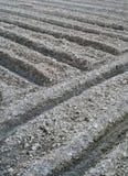 fält plogad rice Arkivbild