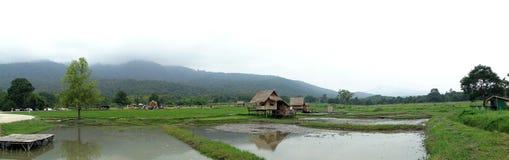 Fält risfältfält, bygden av lantliga Thailand royaltyfria foton