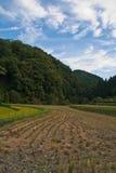 fält skördad japansk rice Royaltyfri Bild
