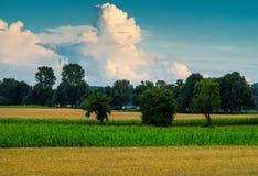 Fält, skog och moln Royaltyfria Bilder