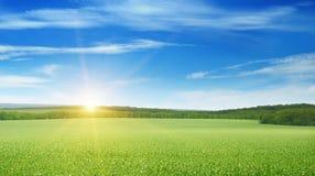 Fält, soluppgång och blå himmel royaltyfria foton