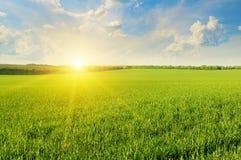 Fält, soluppgång och himmel Royaltyfria Bilder