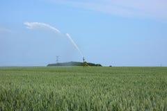 fält som bevattnar vete Royaltyfria Bilder