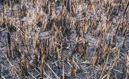 Fält som brännas av brand 'Den miljö- katastrofen', Royaltyfri Fotografi