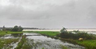 Fält som fylls med vatten Arkivfoto