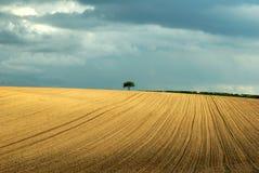 fält som plöjas fjäder Royaltyfri Bild
