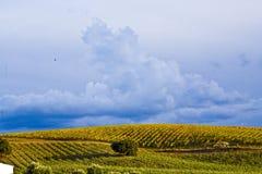 Fält som planteras med vinrankor Arkivfoto