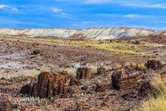 Fält som skräpas ner med förstenat trä; kullar i bakgrund Royaltyfri Fotografi
