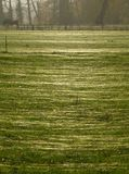 Fält som täckas med en matta av spindelnät Arkivfoton