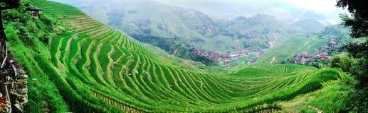 fält terrasserad by arkivfoto