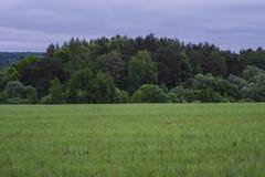 Fält, träd och den molniga himlen Royaltyfri Fotografi