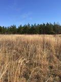 Fält, träd och himmel Arkivfoton