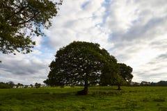 Fält, träd och molnig himmel royaltyfri foto
