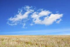Fält under den blåa himlen royaltyfri bild