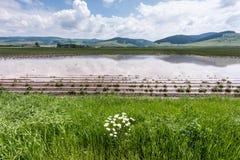 Fält under flodvatten Fotografering för Bildbyråer