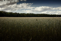 Fält under molnig himmel Royaltyfria Foton