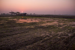 Fält under rissäsongen arkivfoto