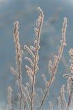 Fält under tung snö royaltyfria foton