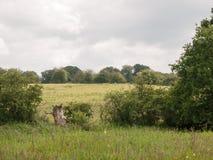 Fält utanför i landet Arkivbild