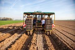 Fältarbetare som planterar sparris royaltyfri bild