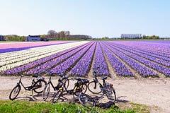 fältblomma holland royaltyfri fotografi