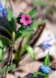 Fältblomman, växer i tidig vår royaltyfria foton