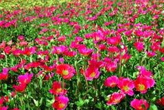 fältblommor Royaltyfria Bilder