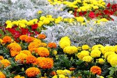 Fältblommor av ringblommor av olika färger arkivbild