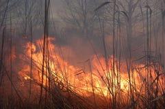 fältbrand arkivfoto