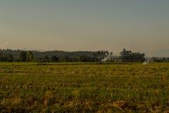 Fälten efter skörd Arkivfoto