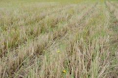 Fälten efter skörd avslutade sig precis om hjulspår medf8ort arkivbild