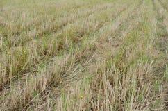 Fälten efter skörd avslutade sig precis om hjulspår medf8ort arkivbilder