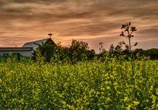 fältet över våldtar solnedgång arkivfoto