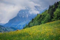 Fältet av guling blommar med bergmaxima i bakgrunden royaltyfri foto