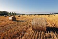 Fältet av höstackar #3 Arkivfoto