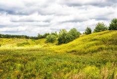 Fältet av sommar blommar med molnig himmel Royaltyfria Bilder
