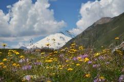 Fältet av sommar blommar mot insnöad bergbakgrund Royaltyfri Foto
