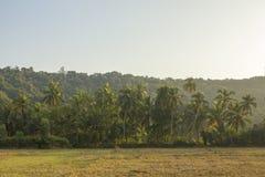 Fältet av torrt gräs mot en gräsplan gömma i handflatan dungen och skogen under en klar blå himmel arkivfoto