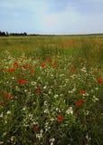fältet blommar den stora fjädern Royaltyfri Bild