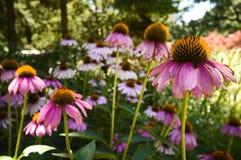 fältet blommar fjädern Royaltyfria Bilder
