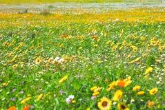 fältet blommar fjädern Fotografering för Bildbyråer